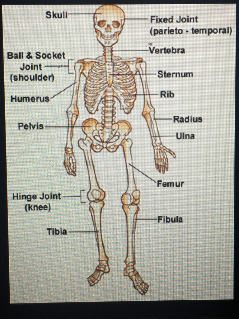 4-8 grade students in physical education google classroom learning about the bones of the body 😎
